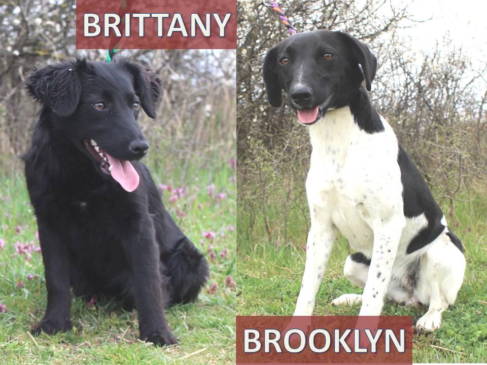 Brooklyn és Brittany