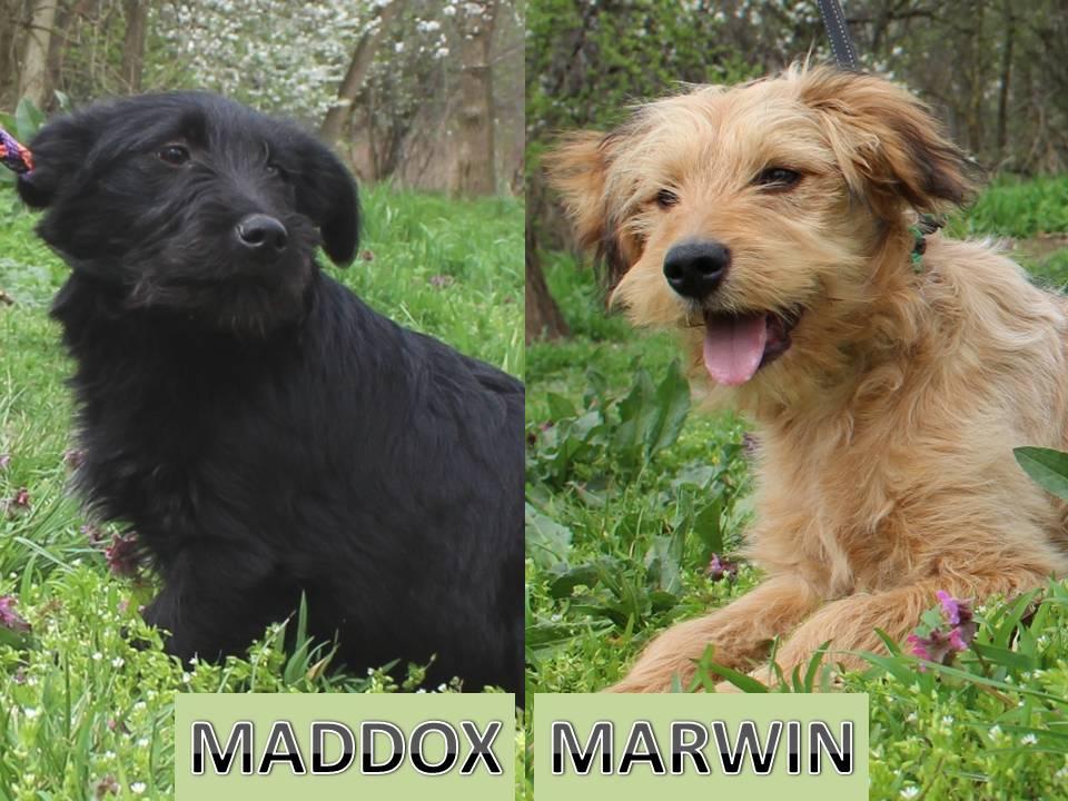 Marwin és Maddox