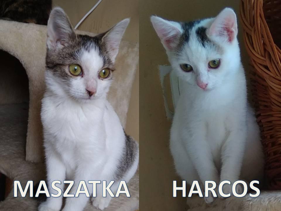 Harcos Maszatka