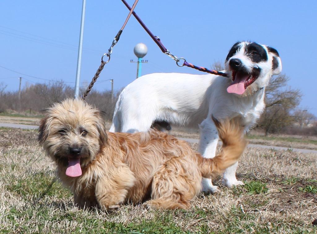 Fifi és Bogi
